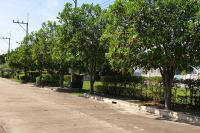 ที่ดินเปล่าหลุดจำนอง ธ.ธนาคารทหารไทยธนชาต ชะอำ ชะอำ เพชรบุรี
